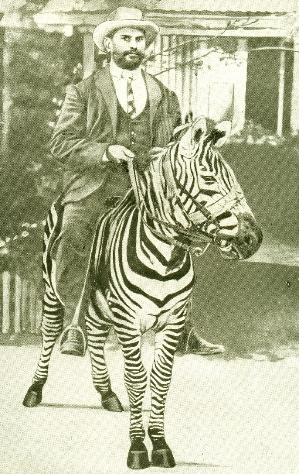 Dr R A Riberio riding a zebra tamed by him in 1907